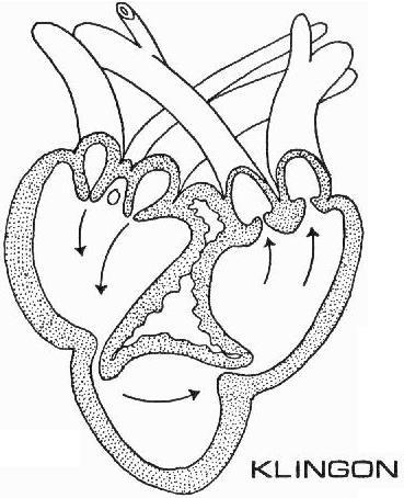 File:Klingon heart diagram (23rd century).jpg