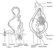 Mako root plant internal diagram