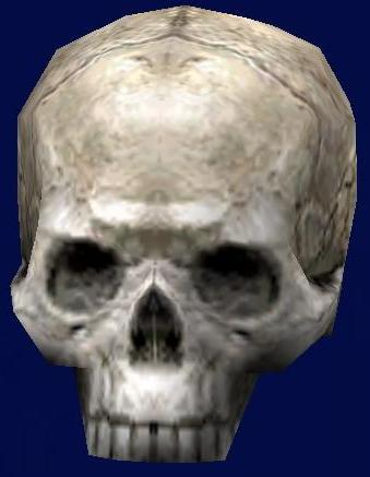 File:Nightsister Bloodline Skull.jpg