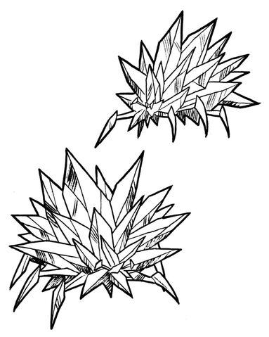 File:Crystal barnacle.jpg