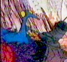 File:Bluebirdsitting.jpg