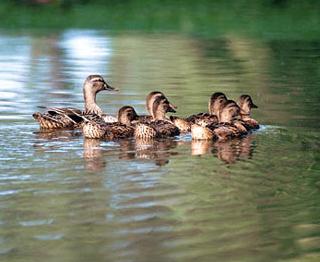 File:Duck Ep 2.jpg