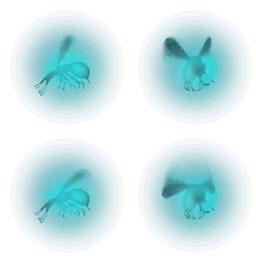 File:Glowzees.jpg