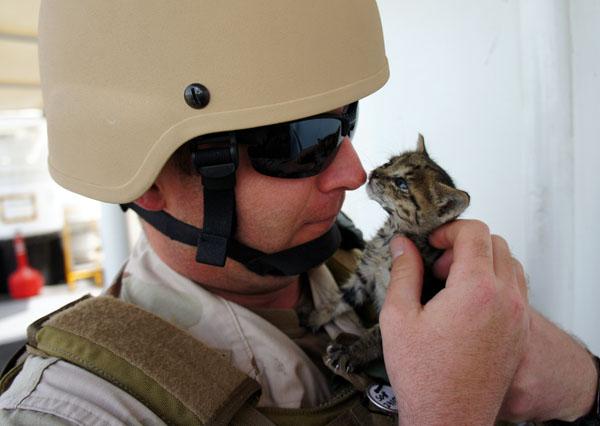 File:Soldier-kitten-1.jpg