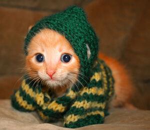 Cute-kitten-cats-6987468-670-578