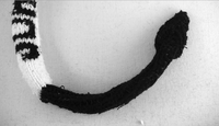 Sock-Fig6