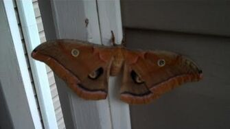 Mothra (Day 614 - 7 31 11)