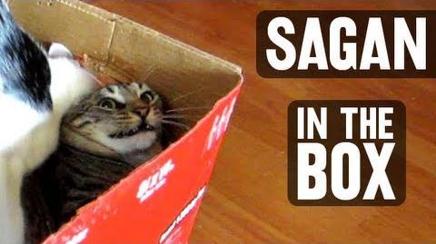 Sagan and Kepler - Sagan In The Box