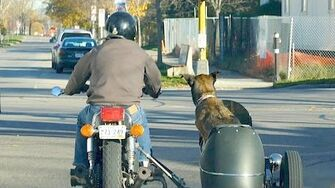 Dog In A Sidecar • 11.4