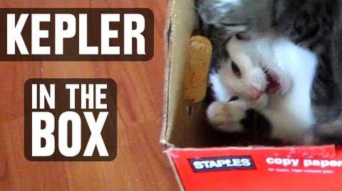 Kep In The Box - Astronocats