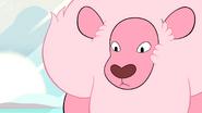 Steven's Lion Lion Stare