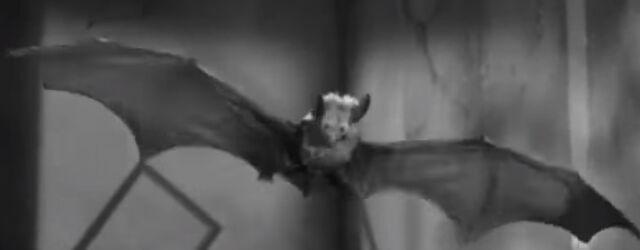 File:Bat's Model.jpg