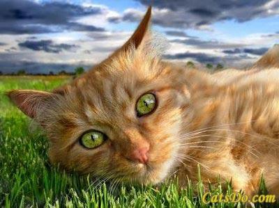 File:Green cat eye.jpg