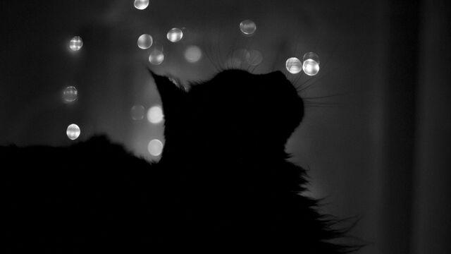 File:Cat silhouette (1).jpg