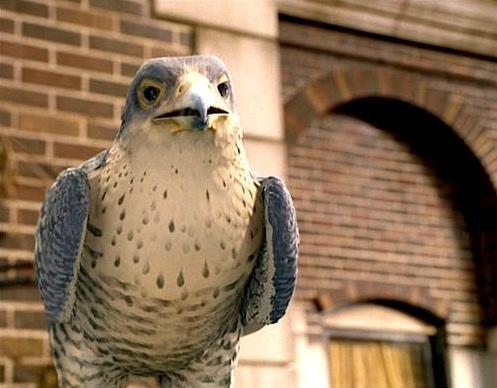 File:Falcon stuart little 2.jpg