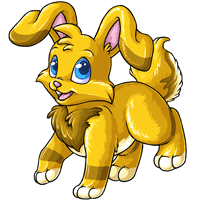 Kanis gold