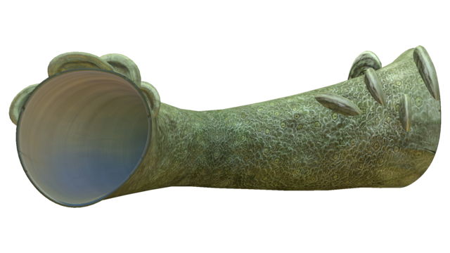 Файл:Coral Tube Fauna.png