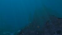 GR Sparse Reef Transition