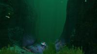 GR Kelp Forest Transition