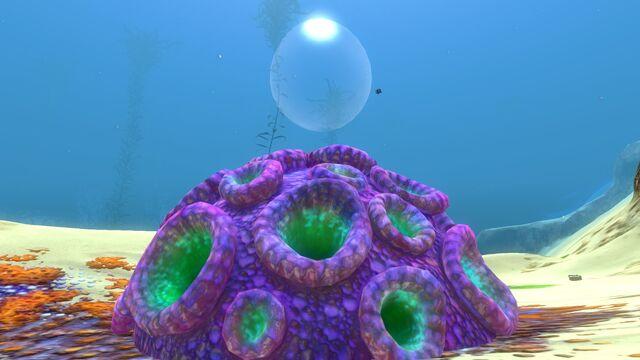 File:Purple Brain Coral 10.jpg
