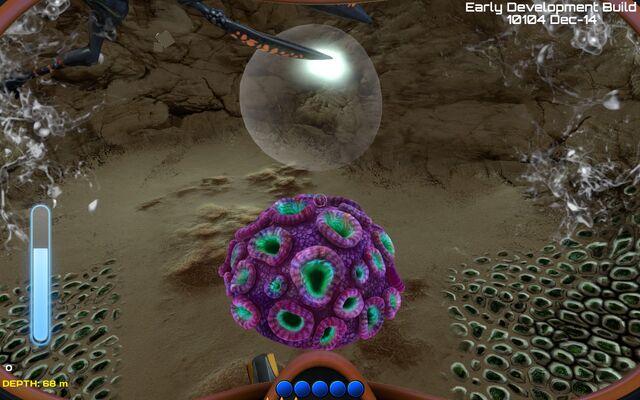 File:Brain coral.jpg
