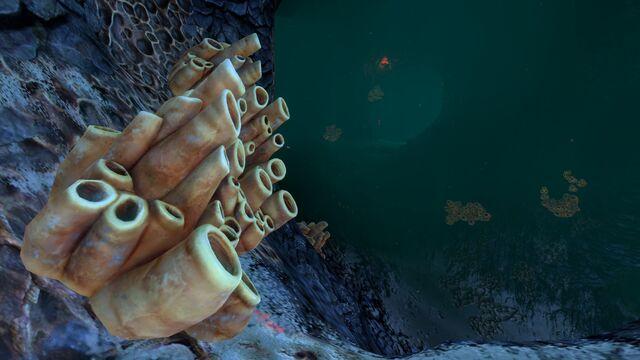File:Brown Coral Tubes 11.jpg