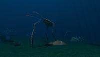 STP Sea Treaders