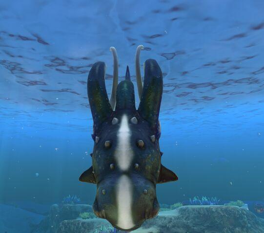 File:Cute Fish 2.jpg