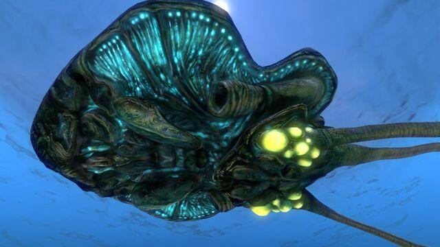 File:Reefback (4).jpg