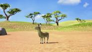 Wildebeest18