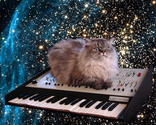 File:Catinspace.jpg