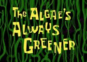 The Algae Always Greener