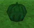 Unripe Pumpkin 2 icon