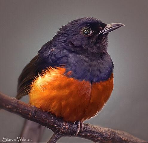 File:Beautiful Bird.jpg