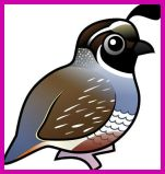 File:Purple quail.jpg