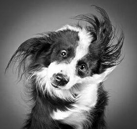 Dogs,black,and,white,dog,humor-083b651706cecc93c545ea898d097840 h