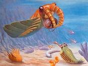 411a cambrian