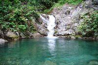 800px-Rain forest