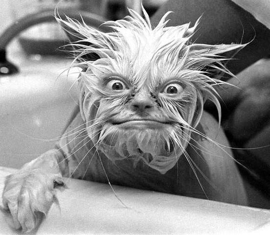 File:Freaky-Cat-1064.jpg