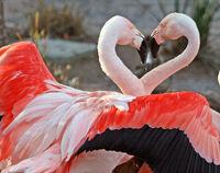 Dance+of+Love-3445
