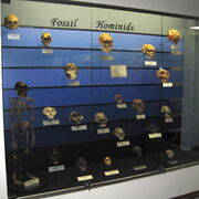 Fossil hominids