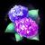 Fairy Hydrangea