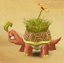 Sandy Tortoise