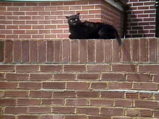 File:Kitling-On-ColwinAvenue-Wall.jpg