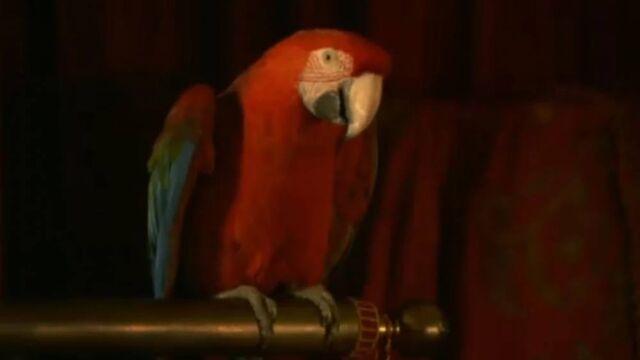 File:Captain Parrot.jpg