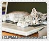 Shawnna-animalia