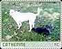 Catherine-phenomena