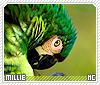 Millie-animalia