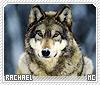 Rachael-animalia