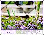 Shirphie-phenomena